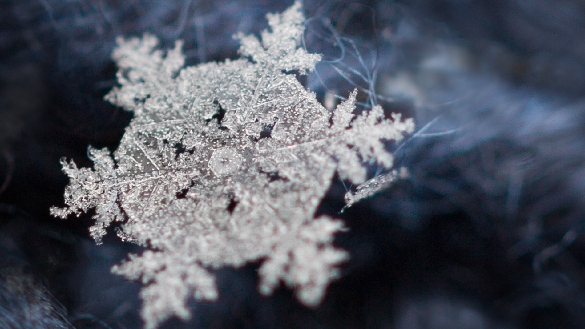 How To Photograph Snowflakes With A Macro Lens Mostly Lisa